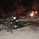 Alberi crollati per la neve tranciano cavi elettrici, disagi a Taverna - Il Lametino